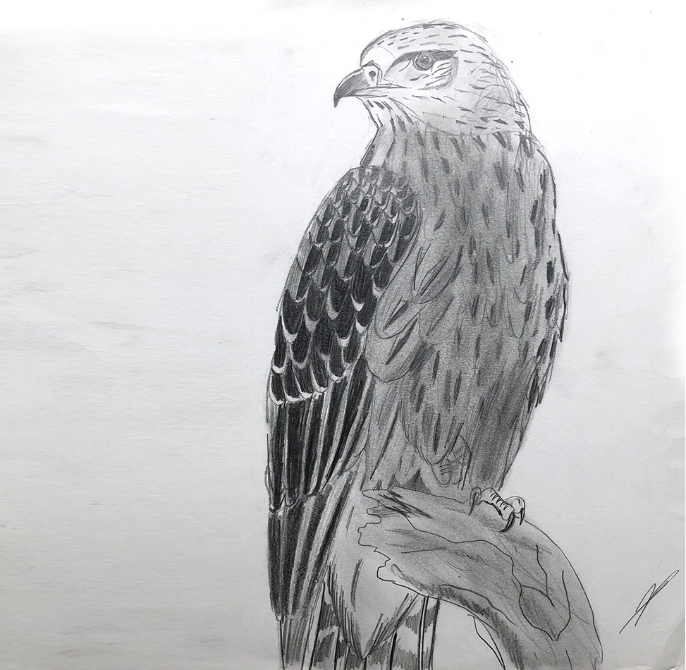 dessin - crayon - HB - pen - 1994 - aigle - eagle - vivien - durisotti - design - experience