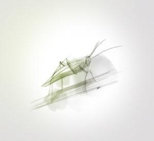 29 novembre 2019 - grasshopper - dessin - vivien - durisotti - design - experience - un - jour - un - dessin