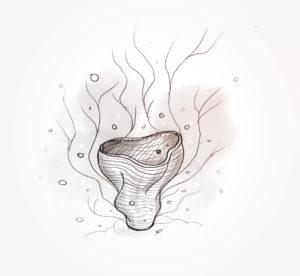 28 janvier 2021 - présentation presse Corail - durisotti - design - experience - un - jour - un - dessin - dessin - vivien - durisotti - design - experience - un - jour - un - dessin