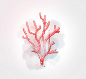 06 octobre - RB - Corail - dessin - vivien - durisotti - design - experience - un - jour - un - dessin - dessin - vivien - durisotti - design - experience - un - jour - un - dessin