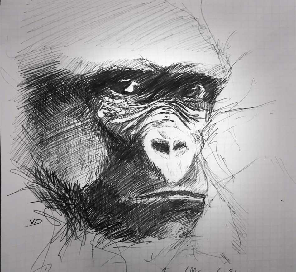 27 août 2019 - vallée des singes - dessin - vivien - durisotti - design - experience - un - jour - un - dessin